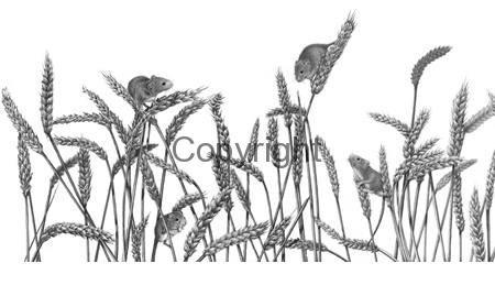 harvest-fesival-mice-lge