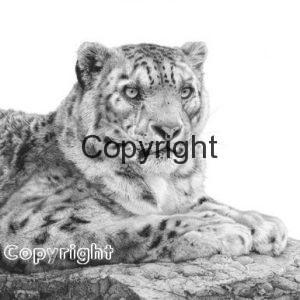 snowleopard